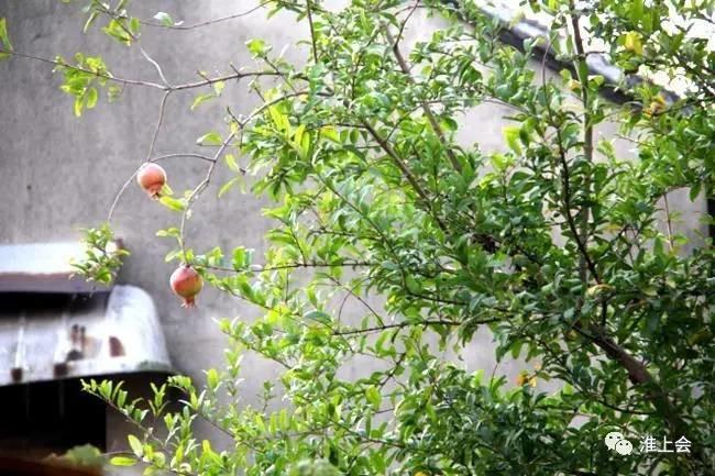 图片[36]-淮安街巷 | 龙窝巷-老淮安